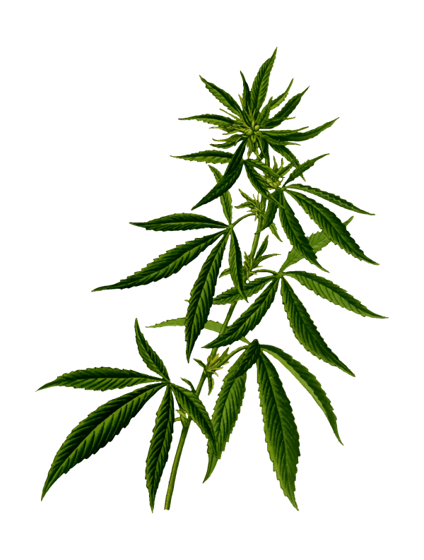 3 месяца курил марихуану семена конопли пищевой купить в